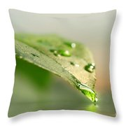 Leaf With Water Droplets Throw Pillow by Sandra Cunningham