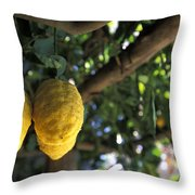 Lemons Hanging From A Lemon Tree Throw Pillow by Richard Nowitz
