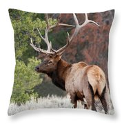 Let The Rut Begin Throw Pillow by Sandra Bronstein
