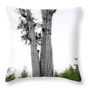 Life at the Top - Duncan Cedar Olympic National Park WA Throw Pillow by Christine Till