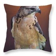 Light morph immature Swainsons Hawk Throw Pillow by Ernie Echols