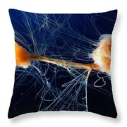 Lions Mane Jellyfish Cyanea Capillata Throw Pillow by George Grall