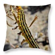 Living Desert Throw Pillow by Christine Till