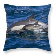 Long-beaked Common Dolphins, Delphinus Throw Pillow by Ralph Lee Hopkins