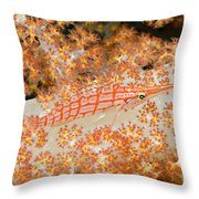 Longnose Hawkfish Throw Pillow by Dave Fleetham - Printscapes
