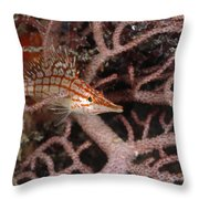 Longnose Hawkfish Hiding In Coral Throw Pillow by James Forte