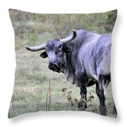 Lotta Bull Throw Pillow by Jan Amiss Photography
