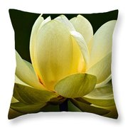 Lotus Blossom Throw Pillow by Christopher Holmes