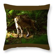 Lynx Rufus Throw Pillow by David Lee Thompson