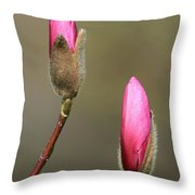 Magnbolia Bloom Throw Pillow by Winston Rockwell