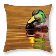 Mallard Drake In The Golden Water Throw Pillow by Mircea Costina Photography