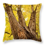 Maple Tree Portrait Throw Pillow by James BO  Insogna