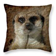 Meerkat 4 Throw Pillow by Ernie Echols