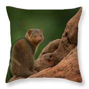 Mini Mongoose Throw Pillow by Joseph G Holland