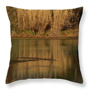 Mirror Spring 2 Throw Pillow by Douglas Barnett