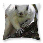 Mr. Inquisitive I  Throw Pillow by Betsy Knapp