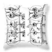 Neuroglia Cells Illustrated By Cajal Throw Pillow by Science Source