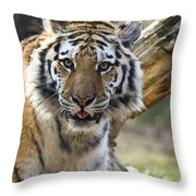 Nice Kitty Throw Pillow by Karol  Livote