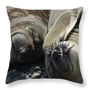 No More Pics Please Throw Pillow by Ernie Echols