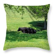 Noon Siesta Throw Pillow by Jan Amiss Photography