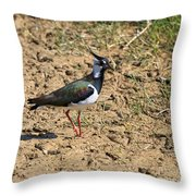Northern Lapwing Throw Pillow by Louise Heusinkveld