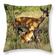 Nursing Fawn Throw Pillow by Marty Koch