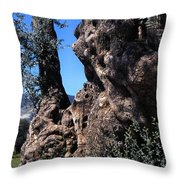 Olive Tree 2000 Years Old Throw Pillow by Thomas R Fletcher