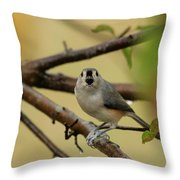Open Wide Throw Pillow by Karol Livote