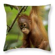 Orangutan Pongo Pygmaeus Baby Swinging Throw Pillow by Christophe Courteau