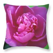 Peony In Pink Throw Pillow by Kathy Yates