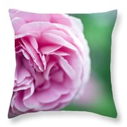 Pink Bourbon Rose LOUISE ODIER Throw Pillow by Frank Tschakert