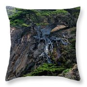 Point Lobos Veteran Cypress Tree Throw Pillow by Charlene Mitchell