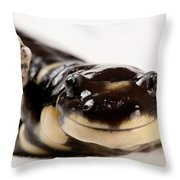 Portrait Of A California Tiger Throw Pillow by Joel Sartore