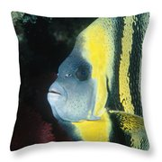 Portrait Of A Cortez Angelfish Throw Pillow by James Forte