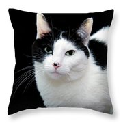 Pretty Kitty Cat 1 Throw Pillow by Andee Design