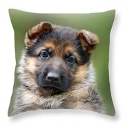 Puppy Portrait Throw Pillow by Sandy Keeton