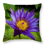 Purple Water Lily Throw Pillow by Ray Laskowitz - Printscapes