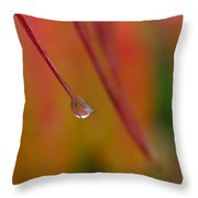 Raindrop Throw Pillow by Juergen Roth