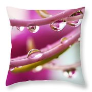 Raindrops Throw Pillow by Marilyn Hunt