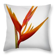 Red Heliconia Throw Pillow by Tomas del Amo - Printscapes