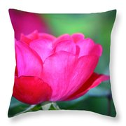 Red Rose Throw Pillow by Teresa Mucha