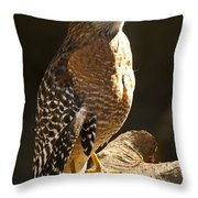 Red-shouldered Hawk Throw Pillow by Carolyn Marshall