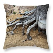 Roots Throw Pillow by Ernie Echols