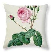 Rosa Centifolia Bullata Throw Pillow by Pierre Joseph Redoute