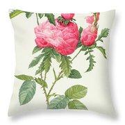 Rosa Centifolia Prolifera Foliacea Throw Pillow by Pierre Joseph Redoute