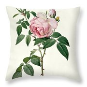 Rosa Chinensis And Rosa Gigantea Throw Pillow by Joseph Pierre Redoute