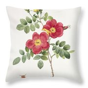 Rosa Eglantera Punicea Throw Pillow by Pierre Joseph Redoute