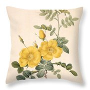 Rosa Eglanteria Throw Pillow by Pierre Joseph Redoute