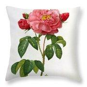 Rosa Gallica Aurelianensis Throw Pillow by Pierre Joseph Redoute