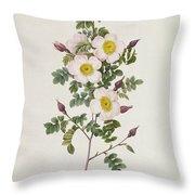 Rosa Pimpinelli Folia Inermis Throw Pillow by Pierre Joseph Redoute